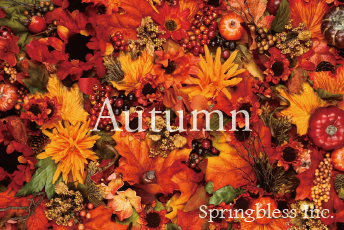 Springbless Inc.