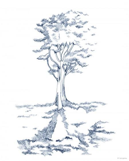 tree-1_in-c